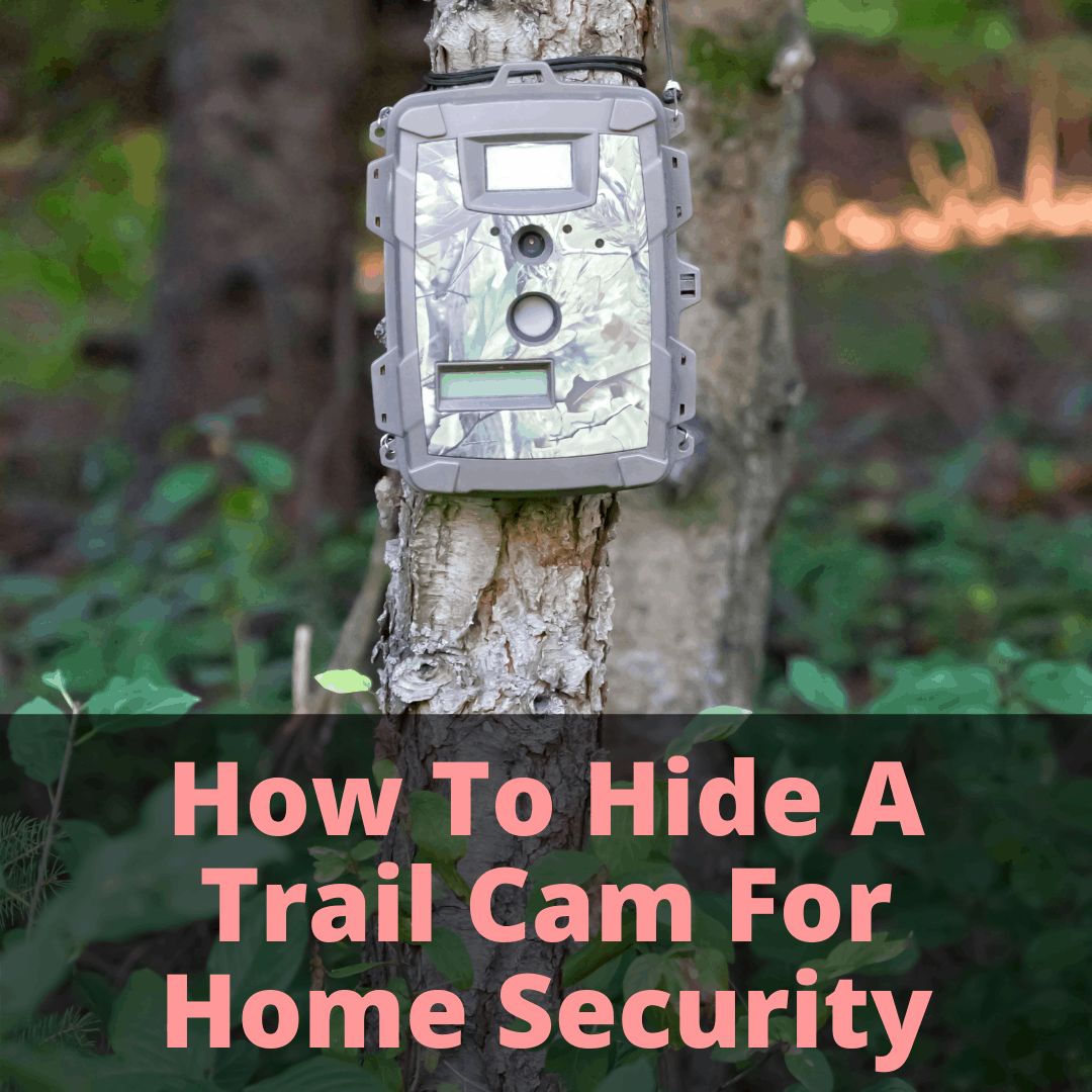 How To Hide A Trail Cam For Home Security